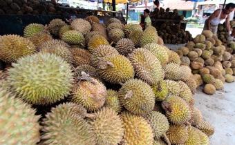 medan banjir buah durian
