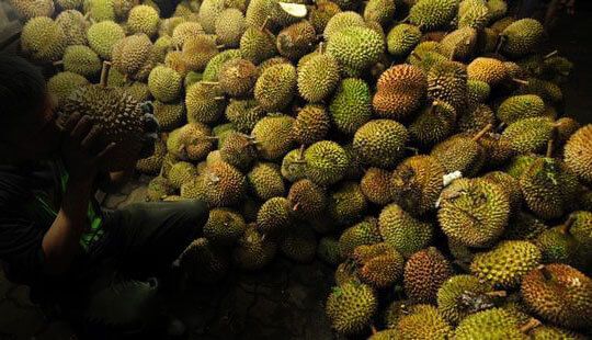 makan durian malam hari