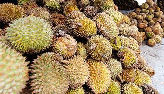 pesta durian siang hari