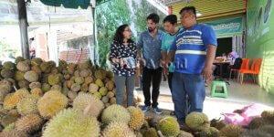 usaha ucok durian