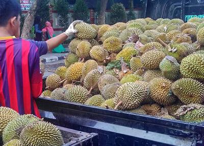 ucok durian utuh jakarta